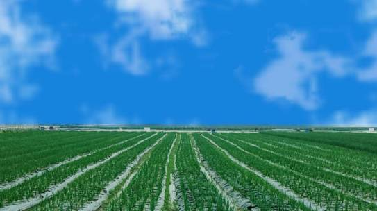 Nông trường trồng hành